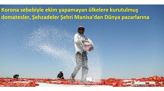 Korona sebebiyle ekim yapamayan ülkelere kurutulmuş domatesler, Şehzadeler Şehri Manisa'dan Dünya pazarlarına